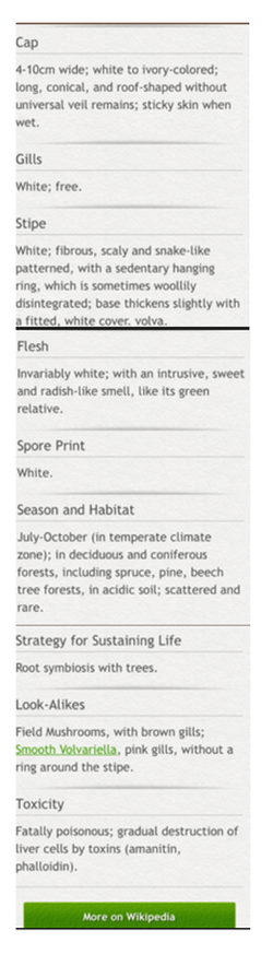 Picture of a Mushrooms pro species description